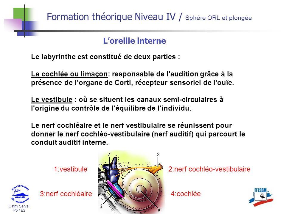 Cathy Serval P5 / E2 Formation théorique Niveau IV / Sphère ORL et plongée Loreille interne Le labyrinthe est constitué de deux parties : La cochlée o