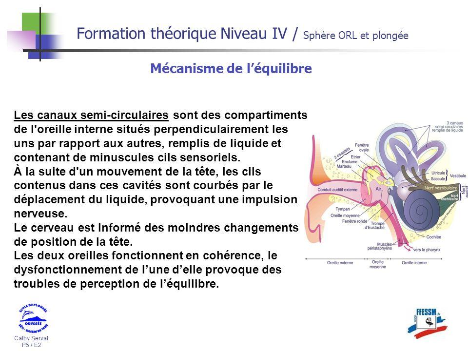 Cathy Serval P5 / E2 Formation théorique Niveau IV / Sphère ORL et plongée Les canaux semi-circulaires sont des compartiments de l'oreille interne sit