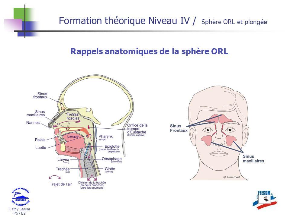 Cathy Serval P5 / E2 Formation théorique Niveau IV / Sphère ORL et plongée Rappels anatomiques de la sphère ORL