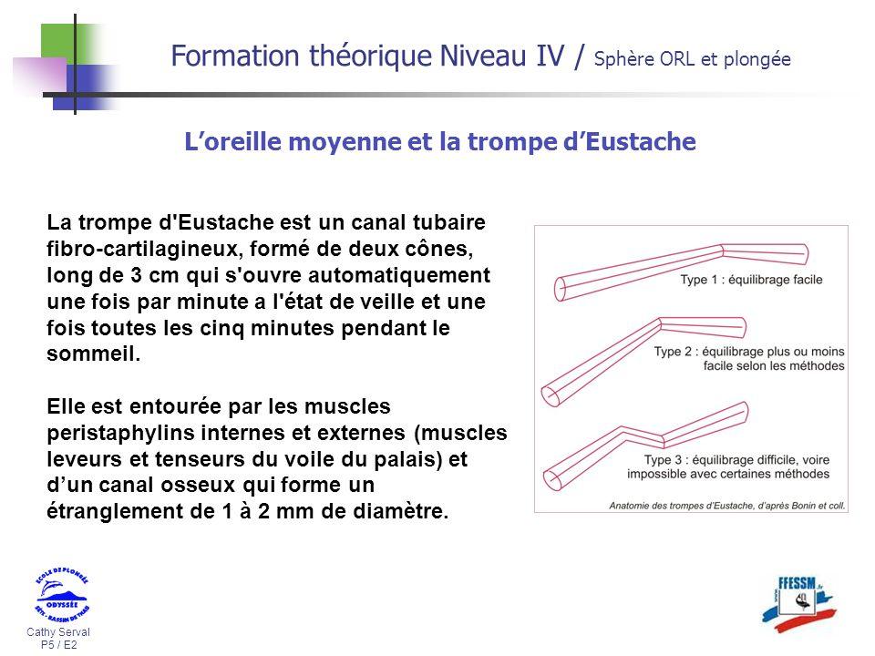 Cathy Serval P5 / E2 Formation théorique Niveau IV / Sphère ORL et plongée La trompe d'Eustache est un canal tubaire fibro-cartilagineux, formé de deu