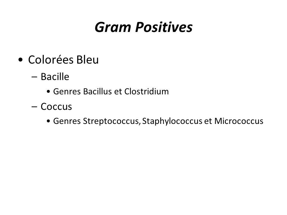 Gram Positives Colorées Bleu –Bacille Genres Bacillus et Clostridium –Coccus Genres Streptococcus, Staphylococcus et Micrococcus