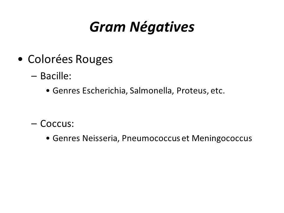 Gram Négatives Colorées Rouges –Bacille: Genres Escherichia, Salmonella, Proteus, etc. –Coccus: Genres Neisseria, Pneumococcus et Meningococcus