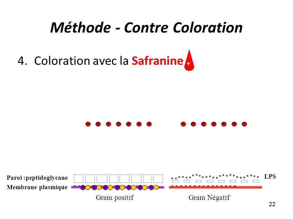 Méthode - Contre Coloration 4.Coloration avec la Safranine 22 Gram positifGram Négatif - - - - - - - - - - - - - - - Membrane plasmique - - - - - - -
