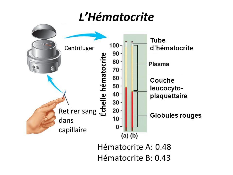 LHématocrite Tube dhématocrite Couche leucocyto- plaquettaire Globules rouges Hématocrite A: 0.48 Hématocrite B: 0.43 Retirer sang dans capillaire Éch