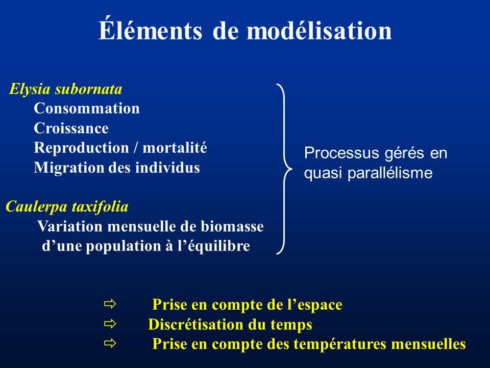 Éléments de modélisation Elysia subornata Consommation Croissance Reproduction / mortalité Migration des individus Caulerpa taxifolia Variation mensue