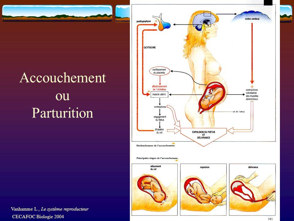 Accouchement ou Parturition Vanhamme L., Le système reproducteur CECAFOC Biologie 2004