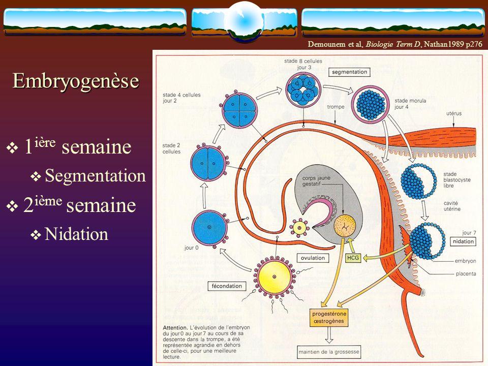 Embryogenèse 1 ière semaine Segmentation 2 ième semaine Nidation Demounem et al, Biologie Term D, Nathan1989 p276