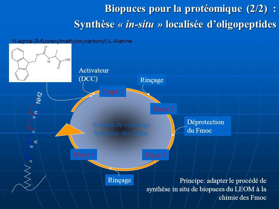 Biopuces pour la protéomique (2/2) : Biopuces pour la protéomique (2/2) : Synthèse « in-situ » localisée doligopeptides Schéma de couplage Synthèse de