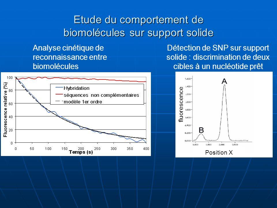 Etude du comportement de biomolécules sur support solide Analyse cinétique de reconnaissance entre biomolécules Détection de SNP sur support solide :