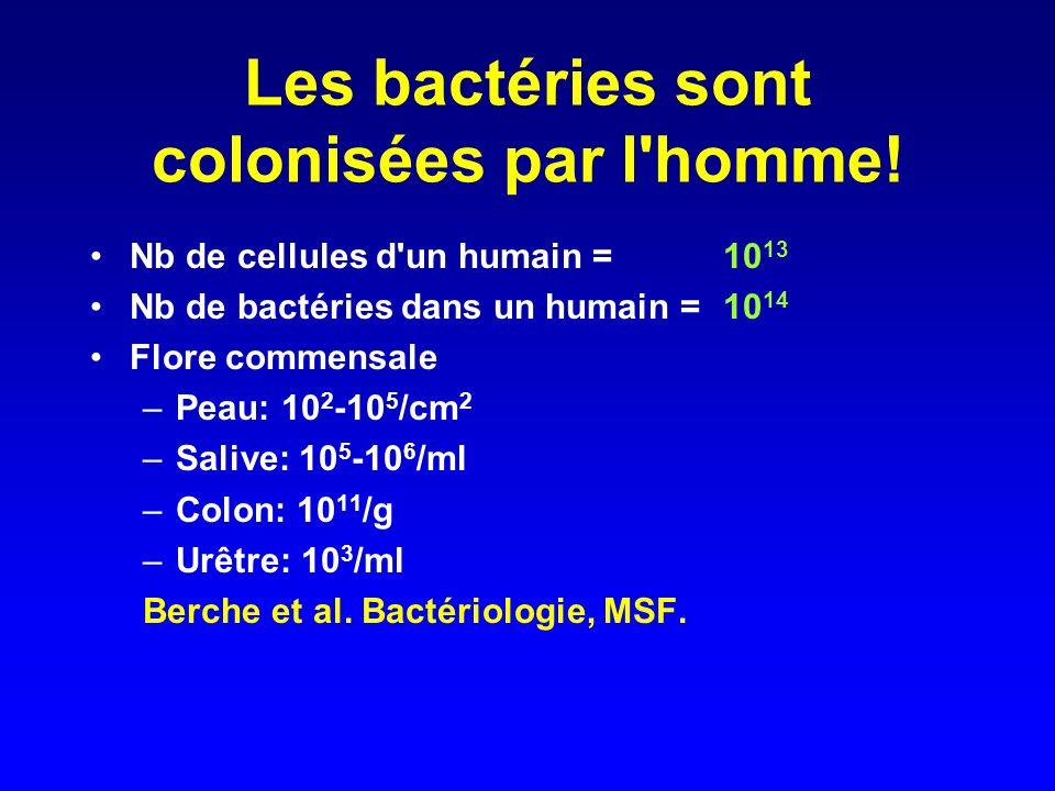 Les bactéries sont colonisées par l'homme! Nb de cellules d'un humain = 10 13 Nb de bactéries dans un humain =10 14 Flore commensale –Peau: 10 2 -10 5