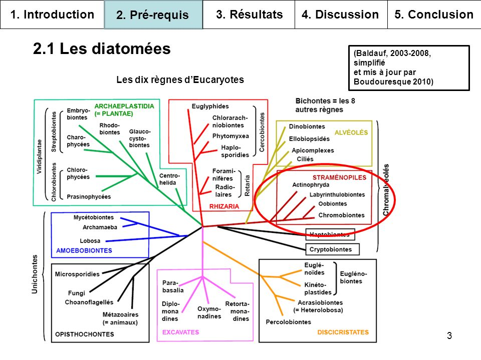 3 2.1 Les diatomées Les dix règnes dEucaryotes (Baldauf, 2003-2008, simplifié et mis à jour par Boudouresque 2010) 1. Introduction 2. Pré-requis 3. Ré