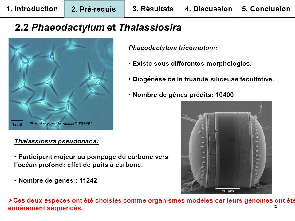 6 2.3 Lendosymbiose secondaire Daprès Roger Prat et Véronique Vonarx (2005) 1.
