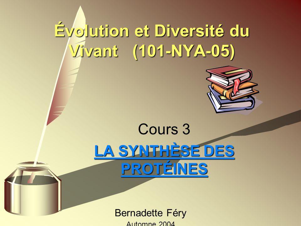 Évolution et Diversité du Vivant (101-NYA-05) Cours 3 LA SYNTHÈSE DES PROTÉINES Bernadette Féry Automne 2004