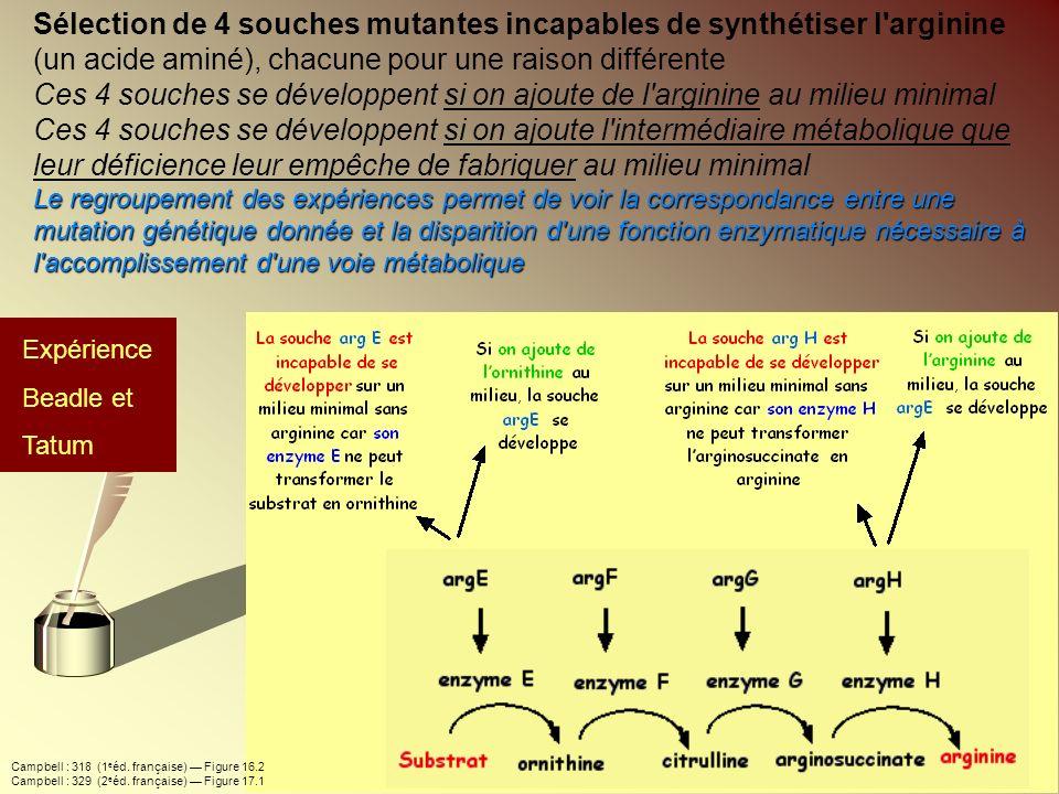 Sélection de 4 souches mutantes incapables de synthétiser l'arginine (un acide aminé), chacune pour une raison différente Ces 4 souches se développent