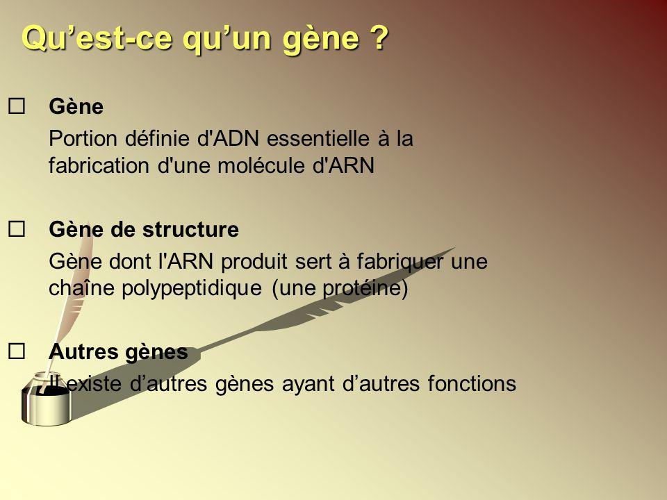 Quest-ce quun gène ? ¨Gène Portion définie d'ADN essentielle à la fabrication d'une molécule d'ARN ¨Gène de structure Gène dont l'ARN produit sert à f