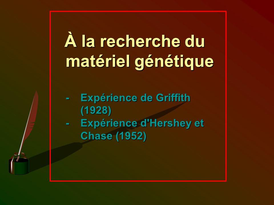 À la recherche du matériel génétique - Expérience de Griffith (1928) - Expérience d'Hershey et Chase (1952)