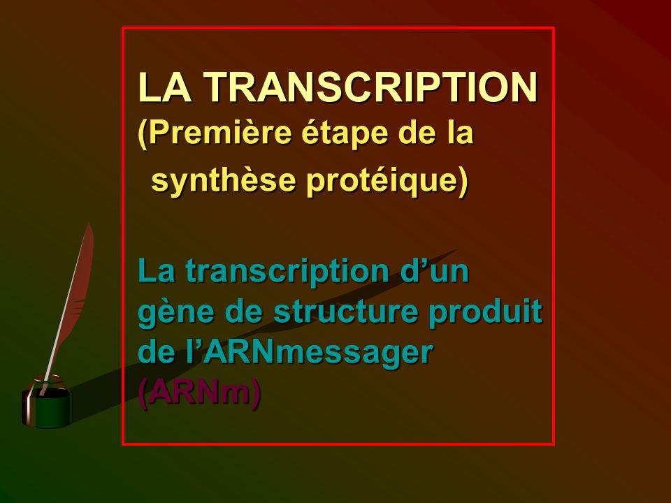LA TRANSCRIPTION (Première étape de la synthèse protéique) La transcription dun gène de structure produit de lARNmessager (ARNm)
