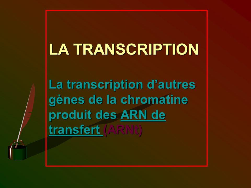 LA TRANSCRIPTION La transcription dautres gènes de la chromatine produit des ARN de transfert (ARNt)
