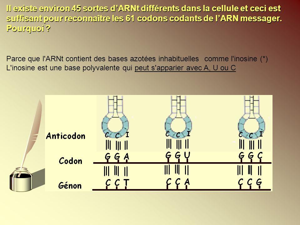 Parce que l'ARNt contient des bases azotées inhabituelles comme l'inosine (*) L'inosine est une base polyvalente qui peut s'apparier avec A, U ou C Il