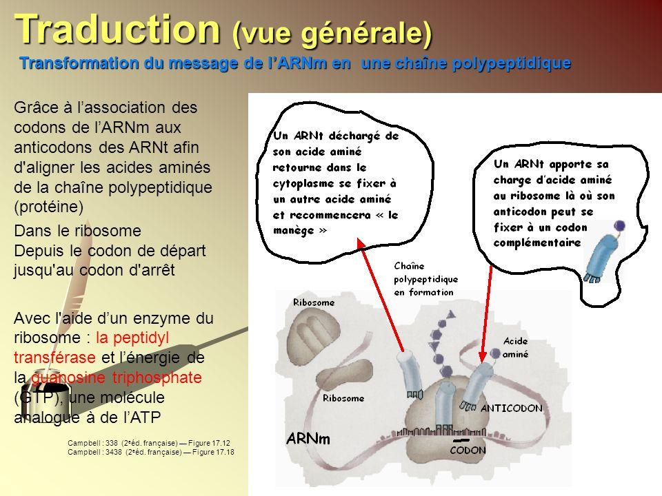 Grâce à lassociation des codons de lARNm aux anticodons des ARNt afin d'aligner les acides aminés de la chaîne polypeptidique (protéine) Dans le ribos