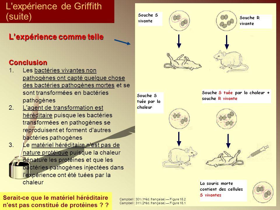 Lexpérience comme telle Conclusion 1.Les bactéries vivantes non pathogènes ont capté quelque chose des bactéries pathogènes mortes et se sont transfor