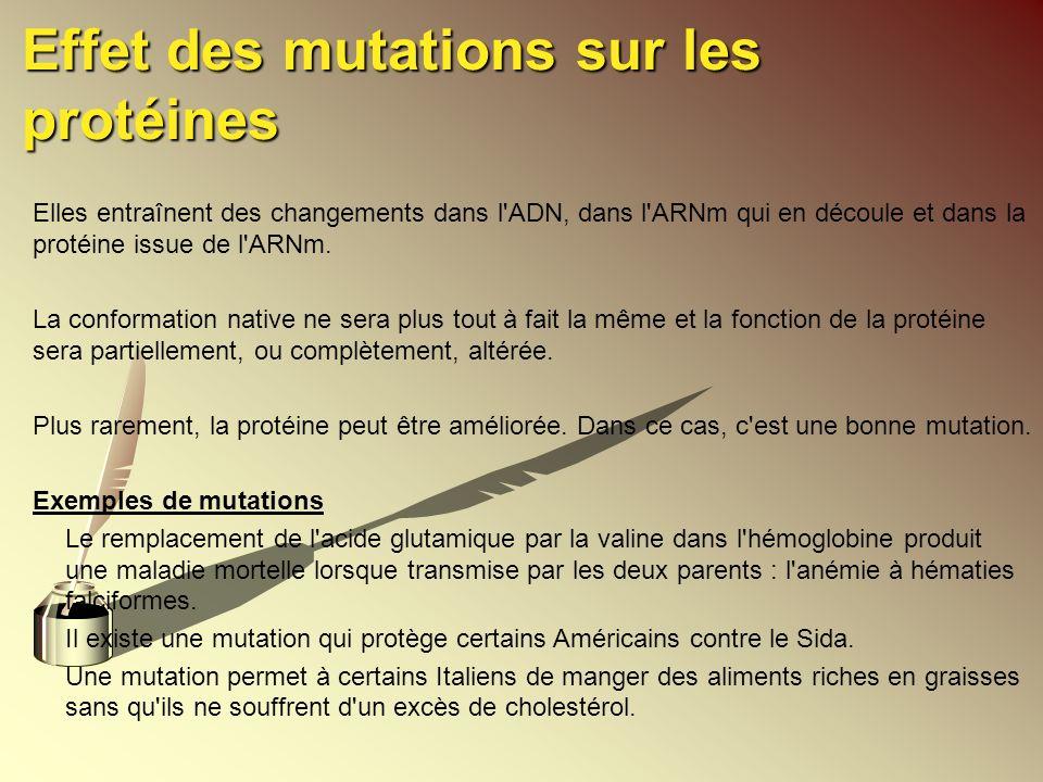 Effet des mutations sur les protéines Elles entraînent des changements dans l'ADN, dans l'ARNm qui en découle et dans la protéine issue de l'ARNm. La
