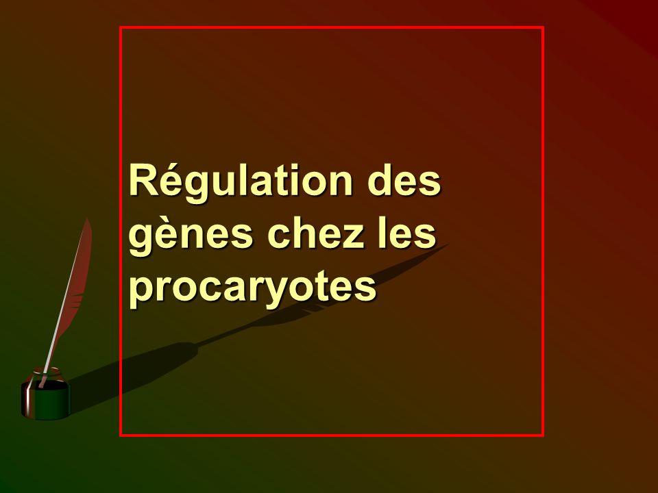 Régulation des gènes chez les procaryotes