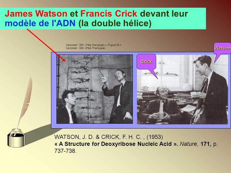 James Watson et Francis Crick devant leur modèle de l'ADN (la double hélice) WATSON, J. D. & CRICK, F. H. C., (1953) « A Structure for Deoxyribose Nuc