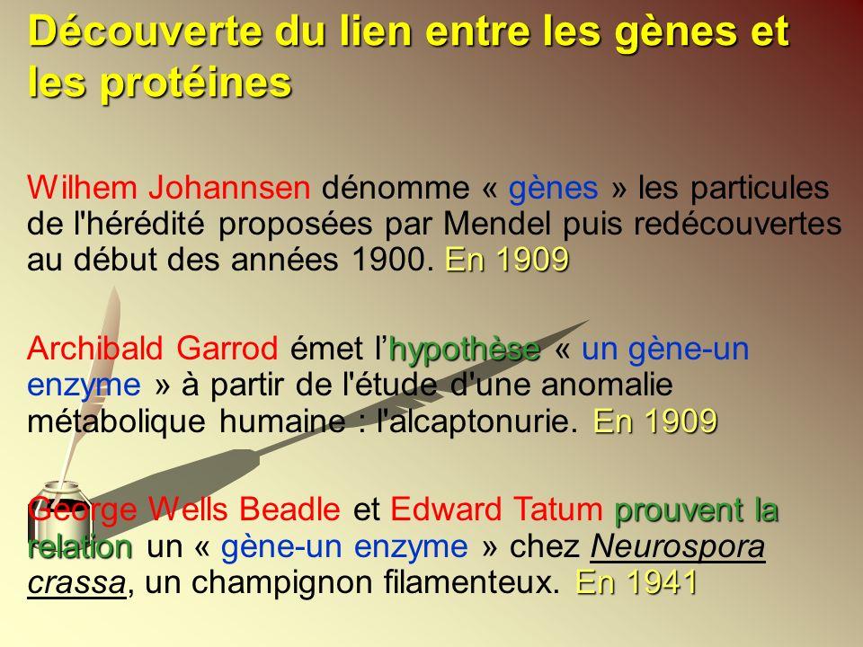 Découverte du lien entre les gènes et les protéines En 1909 Wilhem Johannsen dénomme « gènes » les particules de l'hérédité proposées par Mendel puis