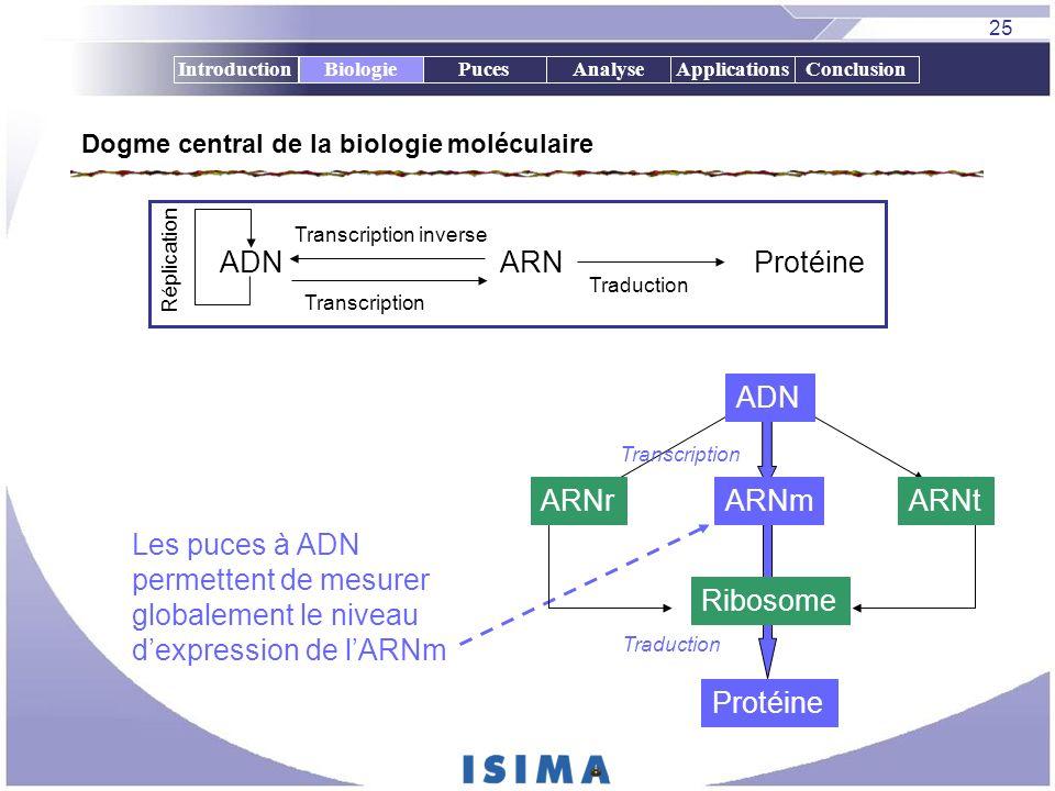 25 IntroductionBiologiePucesAnalyseApplicationsConclusion Dogme central de la biologie moléculaire ADNARNProtéine Transcription Traduction Réplication