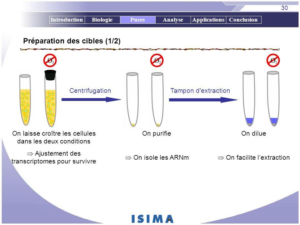 30 IntroductionBiologiePucesAnalyseApplicationsConclusionPuces Préparation des cibles (1/2) On laisse croître les cellules dans les deux conditions Aj