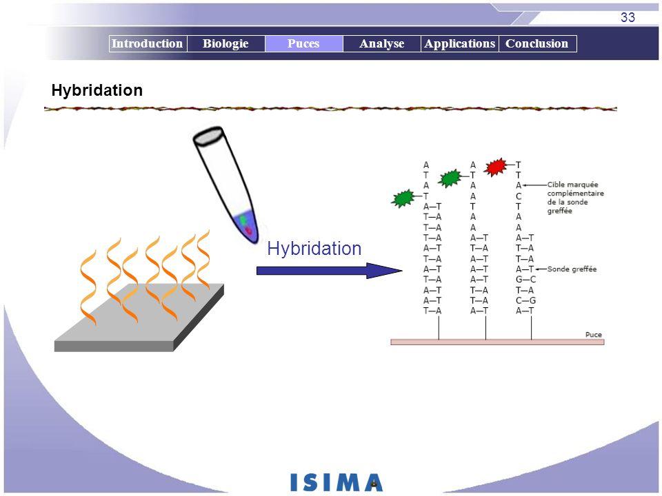 33 IntroductionBiologiePucesAnalyseApplicationsConclusion Hybridation Puces Hybridation