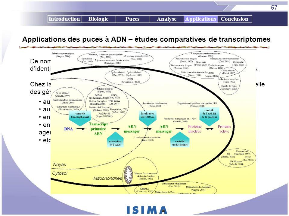 57 IntroductionBiologiePucesAnalyseApplicationsConclusion Applications des puces à ADN – études comparatives de transcriptomes Applications De nombreu
