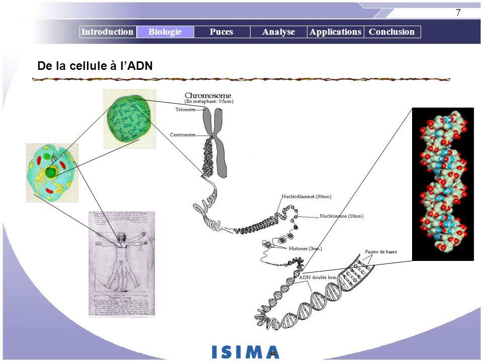 7 IntroductionBiologiePucesAnalyseApplicationsConclusion De la cellule à lADN Biologie