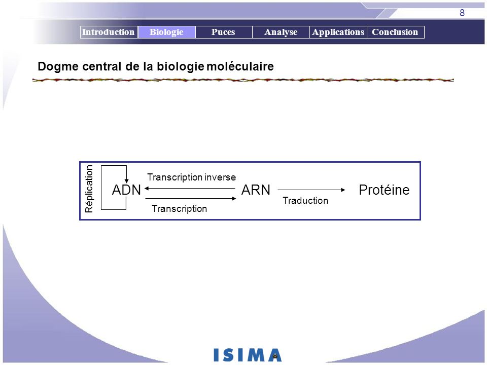 9 IntroductionBiologiePucesAnalyseApplicationsConclusion Elements de biologie moléculaire Biologie Transcription Traduction Synthèse de protéines ADN ARNm ARNt Acides aminés ARNm codon Membrane nucléaire Anticodon ARN polymérase Nucléotides ARN ARNr Ribosome Chaîne polypeptide