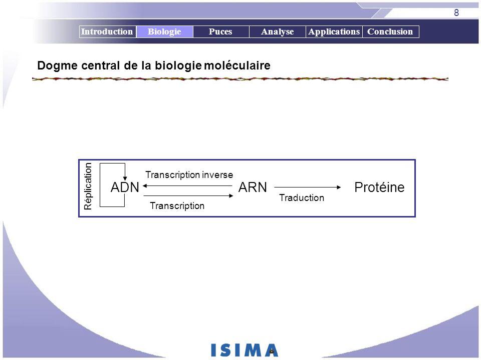 8 IntroductionBiologiePucesAnalyseApplicationsConclusion Dogme central de la biologie moléculaire ADNARNProtéine Transcription Traduction Réplication
