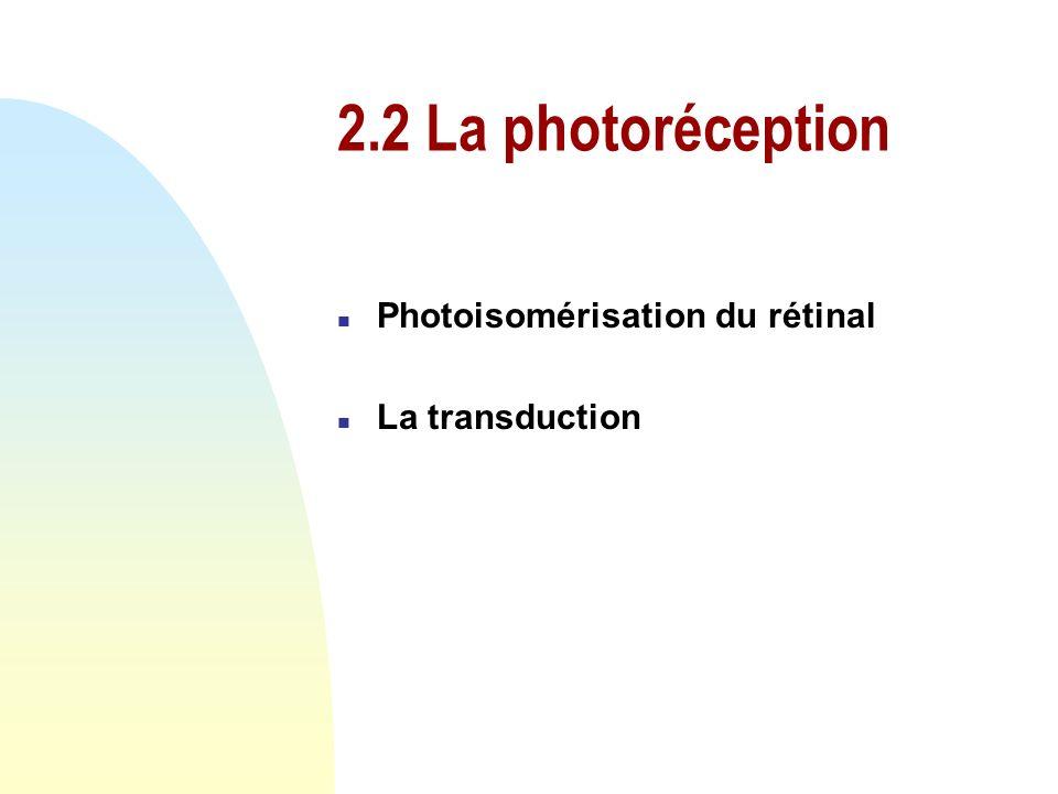 2.1 La lumière n Dualité onde-corpuscule n Onde électromagnétique n Photon