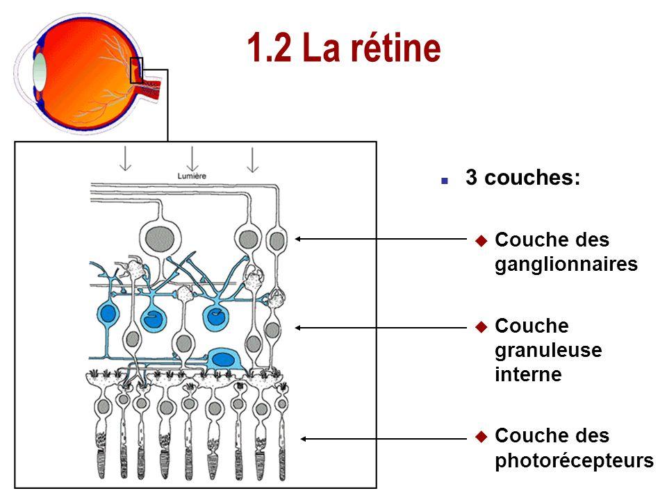 1.1 Lanatomie de loeil n 3 membranes u Sclérotique u Choroïde u Rétine n 4 milieux transparents u Cornée u Humeur aqueuse u Cristallin u Corps vitré