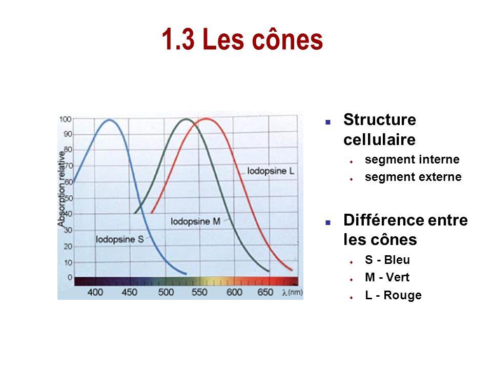 n Structure cellulaire u segment interne u segment externe n Différence entre les cônes u S - Bleu u M - Vert u L - Rouge 1.3 Les cônes
