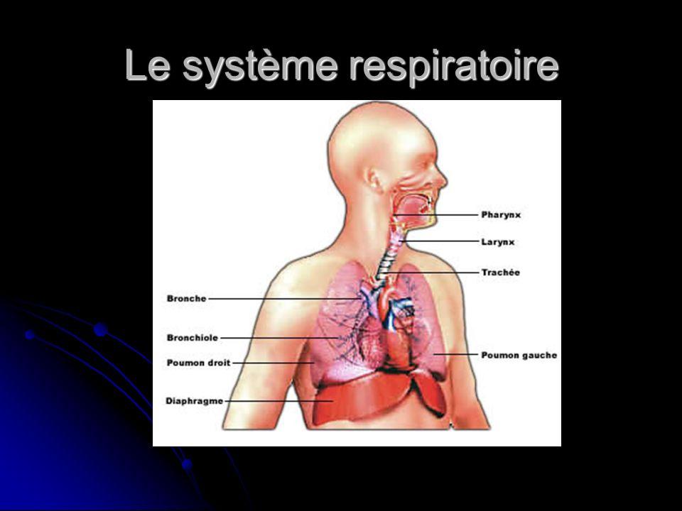 Le fonctionnement du système dans le corps humain (son rôle) Les poumons et les organes du système respiratoire jouent un rôle vital puisqu ils sont chargés de loxygène dans l organisme.