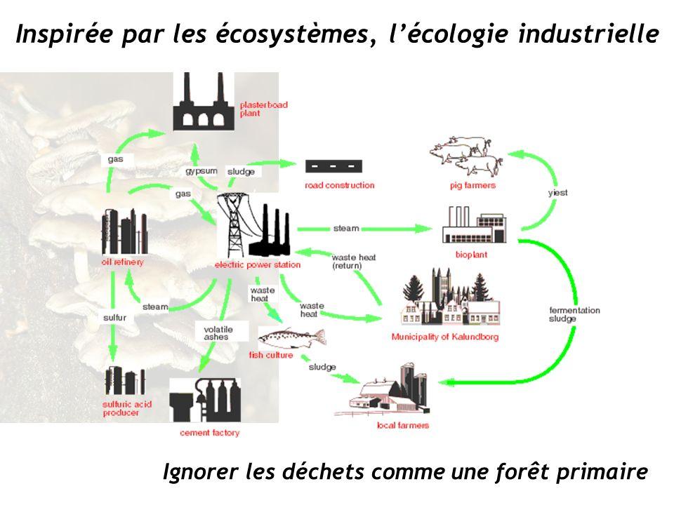 Ignorer les déchets comme une forêt primaire Inspirée par les écosystèmes, lécologie industrielle