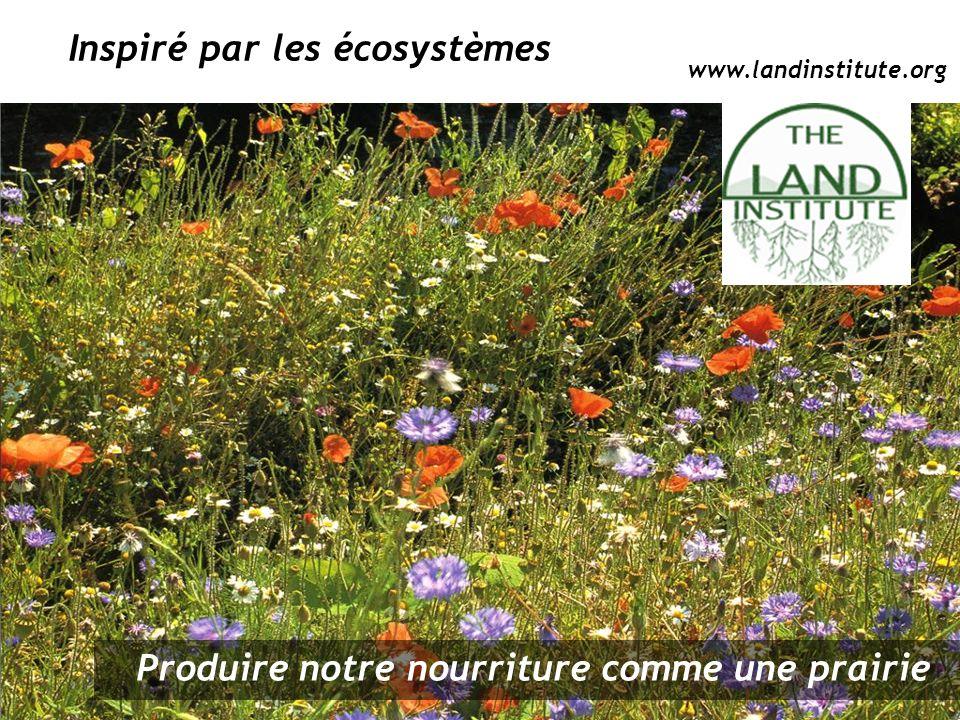 Produire notre nourriture comme une prairie Inspiré par les écosystèmes www.landinstitute.org
