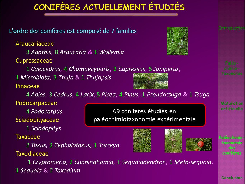 L'ordre des conifères est composé de 7 familles Araucariaceae 3 Agathis, 8 Araucaria & 1 Wollemia Cupressaceae 1 Calocedrus, 4 Chamaecyparis, 2 Cupres