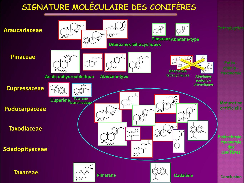 Introduction Paléo- chimio- taxonomie Maturation artificielle Conclusion Cupressaceae Podocarpaceae Taxodiaceae Sciadopityaceae Paléochimio- taxonomie