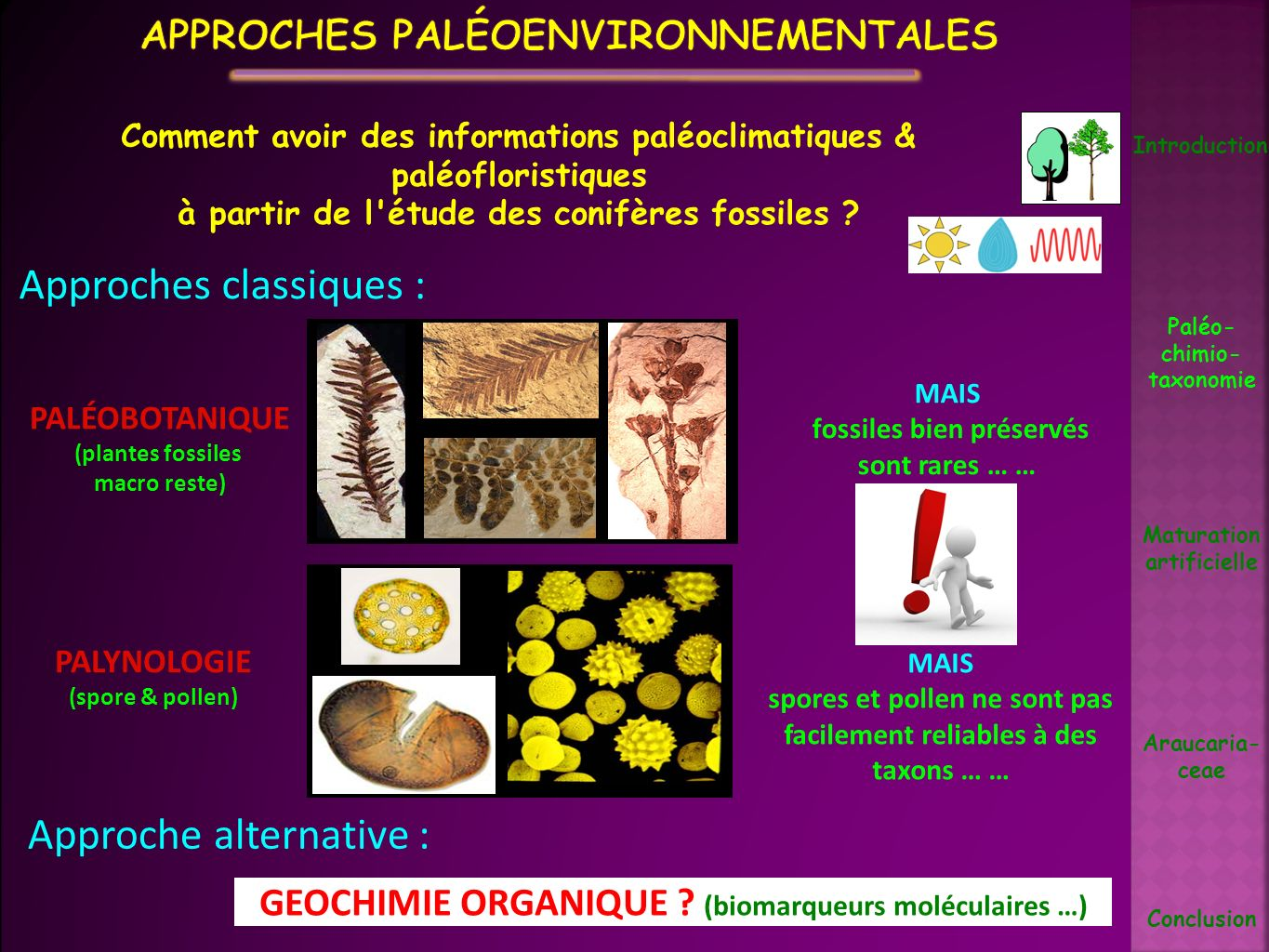 Introduction Paléo- chimio- taxonomie Maturation artificielle Araucaria- ceae Conclusion