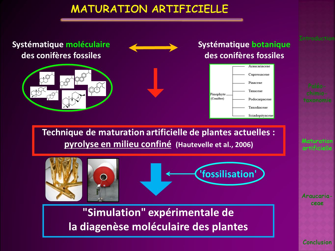Plante fraiche Tubes d or soudés Pyrolyse en milieu confiné Mise en solution des terpénoïdes (CH 2 Cl 2 ) Aliphatique Aromatique Polaire Fractionnement Analyse moléculaire (GC-MS) Introduction Paléo- chimio- taxonomie Maturation artificielle Araucaria- ceae Conclusion