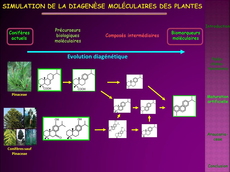 Evolution diagénétique Biomarqueurs moléculaires Précurseurs biologiques moléculaires Composés intermédiaires Conifères actuels Pinaceae Conifères sau