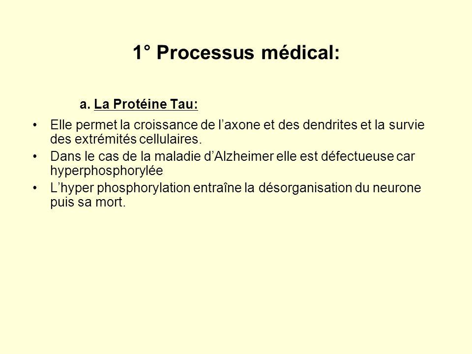 1° Processus médical: a. La Protéine Tau: Elle permet la croissance de laxone et des dendrites et la survie des extrémités cellulaires. Dans le cas de
