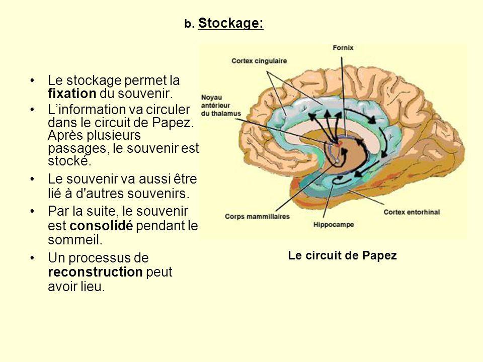 Le stockage permet la fixation du souvenir. Linformation va circuler dans le circuit de Papez. Après plusieurs passages, le souvenir est stocké. Le ci