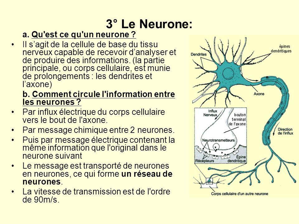 3° Le Neurone: a. Qu'est ce qu'un neurone ? Il sagit de la cellule de base du tissu nerveux capable de recevoir danalyser et de produire des informati